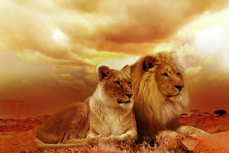 Gemeinsamkeiten von Trading und die Höhle der Löwen